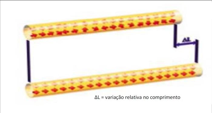 Figura 3A variação do comprimento  (∆L) é devido à orientação dos campos de Weiβ, sob influência de um ímã externo paralelo.